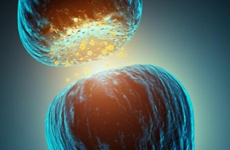 neurotransmissores-450x450 copy
